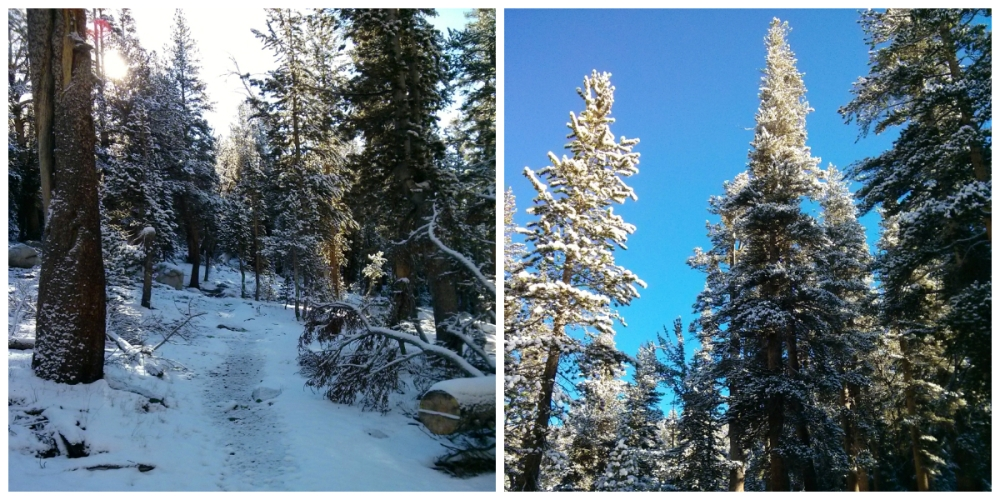 collage_snow