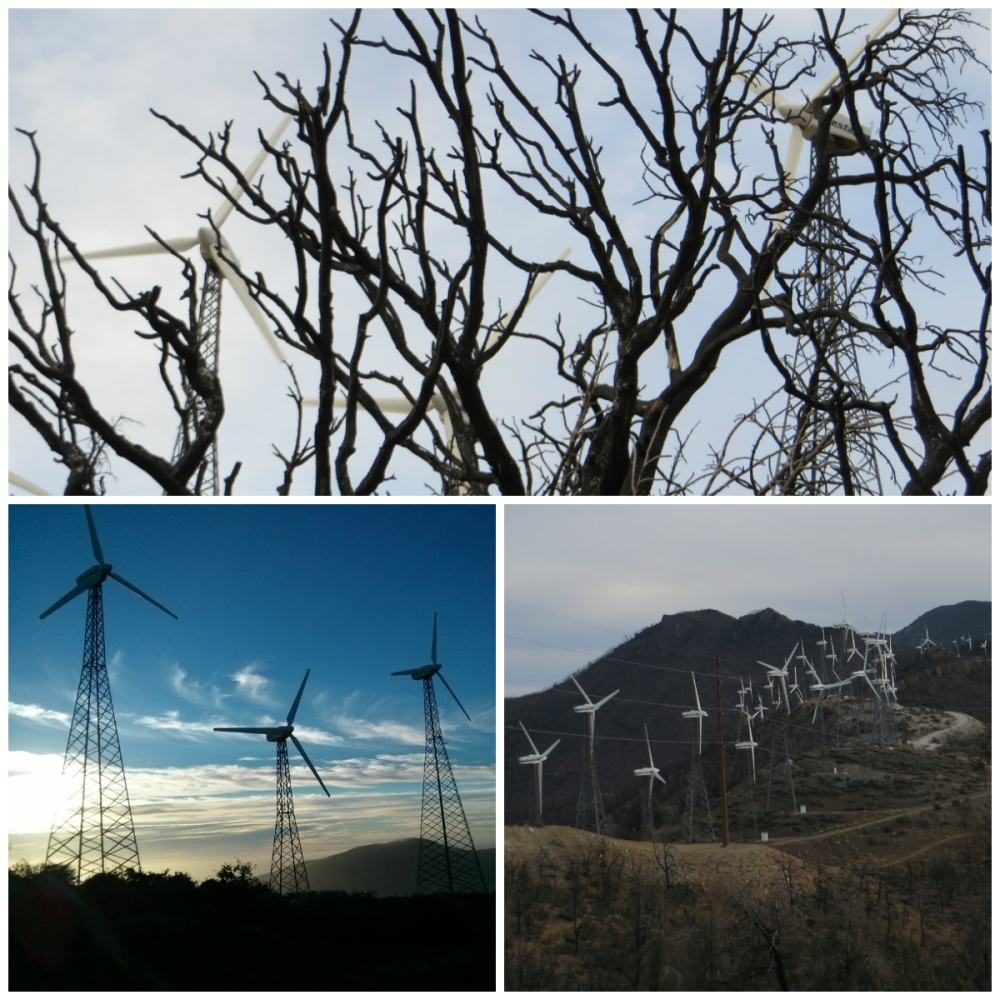 collage_windmills